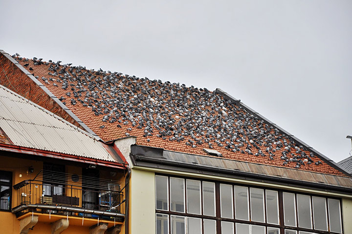 A2B Pest Control are able to install spikes to deter birds from roofs in Hayes.