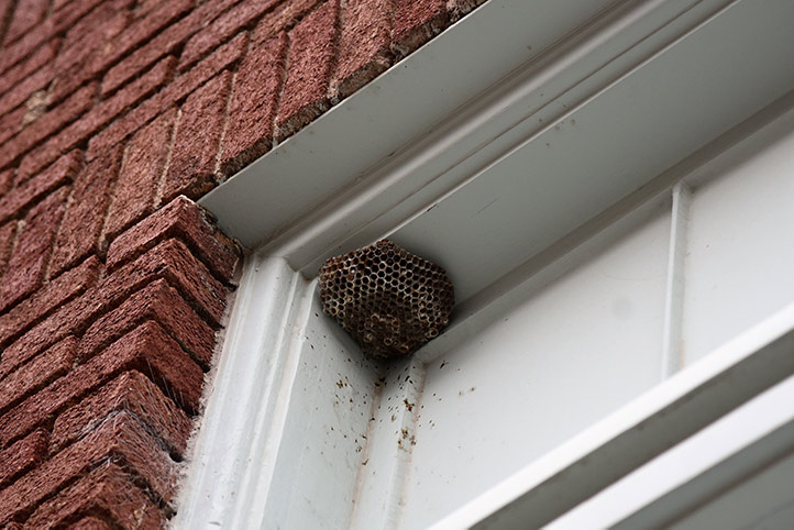 We provide a wasp nest removal service for domestic and commercial properties in Hayes.